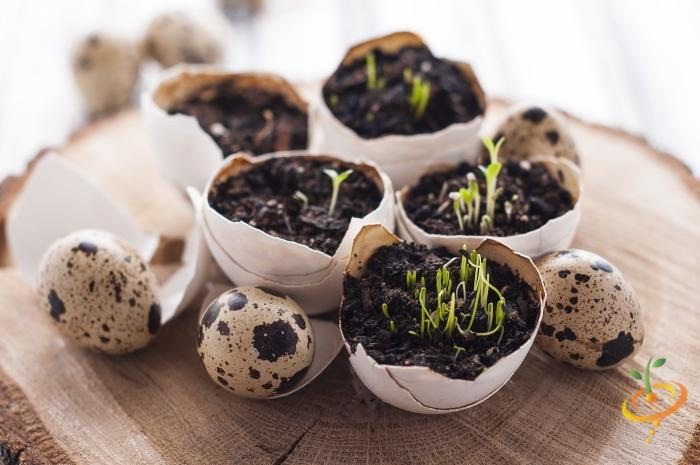 Revealed: The Top 11 Easiest Medicinal Herb Seeds You Can Grow At Home!